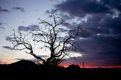 sunset 2 (ivanmuñozperez) Tags: sunset tree sun nikon city yecla d3300 red atardecer sol flickr
