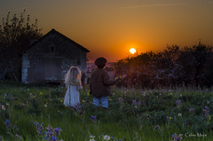 Same direction (J'AIME...) Tags: sunset children fields countrysides spring flowers romantic champs fleurs couchésoleil