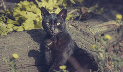 Hello everyone (Alex pozhydaev) Tags: cat cats animals wildlife wild photography alexander pozhydaev popular funny