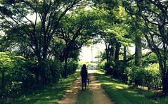 Maria at the Trees (andreimessias) Tags: trees árvore trilha track green verde fazenda nature natureza trena breeze smooth suavidade
