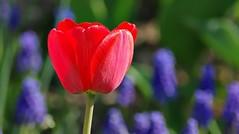 Contraste (mamietherese1) Tags: ngc flowersarefabulous npc earthmarvels50earthfaves phvalue