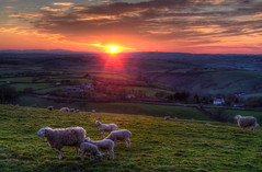 Sunset near Liskeard, Cornwall (Baz Richardson (trying to catch up again!)) Tags: cornwall looe liskeard sunsets landscapes sheep bindown