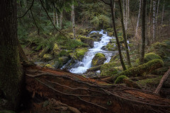A Quiet Lunch (writing with light 2422 [not pro}) Tags: changecreek northbend forest creek waterfall washingtonstate richborder sonya77 landscape aquietlunch