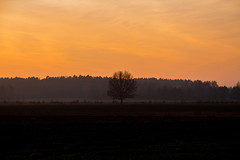 Lonely in the fields (iwona.kilichowska) Tags: tree trees scenery countryside landscape sunset sky contrast orange nature field fields golden evening poland silhouette autumn rural