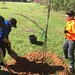 Highland_Renaissance_Tree_Planting_Event_2017 (55)
