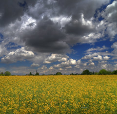 Italian spring sky (Robyn Hooz (away)) Tags: colza ripeseed giallo nuvole clouds sky cielo padova primavera spring joy contrasto contrast hot cold front fronte
