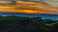 DSC_4303 (Kaloyan Cholakov) Tags: aberystwyth walk sunset sheep people landscape sea river animals