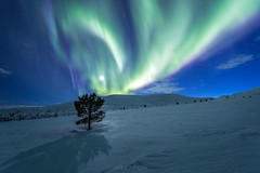 Pallastunturi (janiylinampa) Tags: pallas pallastunturi fell lapland finland lappi suomi laponie laponia lappland finnland revontulet nordlicht polarlicht northernlights auroraborealis aurora auroras phenomenon snow green blue stars night nightphotography moon moonlight
