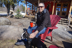 At Biscotti Café (lezumbalaberenjena) Tags: old chelsea gatineau quebec spring time springtime primavera dog perro chien chiot boston terrier bully