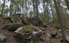 Boulder Strewn Acadian Forest (TheNovaScotian1991) Tags: novascotia canada colchestercounty truro victoriapark maritimes acadianforest boulders rocks large shadow spring season landscape beautiful fallenleaves moss lichen faultline forest woods trees tokina1116mmdxii raw ultrawideangle morning nikond3200 tokina
