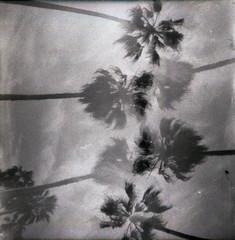 california (beth maciorowski) Tags: 35mm film dianamini lomo analog doubleexposure venicebeach