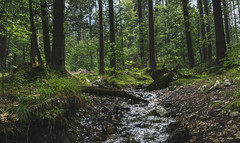 Barefoot brook (johndifool) Tags: natur creek bach wald forest 7dwf trees bäume wood holz stones steine gras weed clearing lichtung