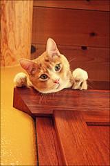 New heights (K. Sawyer Photography) Tags: animal cat climb tabby shelf