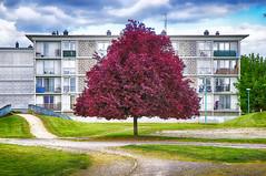 Vegetation urbaine (Pimpame) Tags: canon rouge cit vert arbres urbain 600d