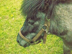 P1010720.jpg (budbrain) Tags: summer horse landscapes sommer blumen olympus josef gras landschaft pferde wald pferd wandern koblenz weg epl forsthaus remstecken epl3 sejrek budbrainde