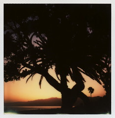 'Roid Week Sunset (tobysx70) Tags: ocean park santa ca trees sunset toby mountains color tree film beach leaves silhouette project polaroid sx70 for bay leaf spring branch glow pacific may palm monica tip cameras type trunk instant week sonar hancock day5 fronds palisades impossible roid the 2014 roidweek impossibleproject tobyhancock impossaroid