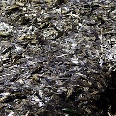 Viejas algas, nuevas texturas (AlmaMurcia) Tags: nikon tabarca d7000 almamurcia fotoencuentrosdelsureste 29salida