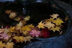 at Eigenji Temple (lazycamera) Tags: leicam8 noktonclassic40mmf14mc