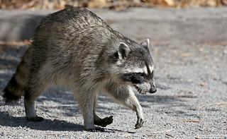 San Joaquin Wildlife Sancutary 6.7.14 1