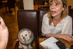 jD201405_075 (chuckp) Tags: dogs la neworleans santaferestaurant