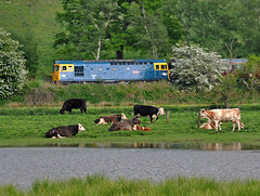 Moooving (Row 17) Tags: uk greatbritain travel england tourism train cattle diesel unitedkingdom transport engineering railway gb locomotive railways staffordshire touristattraction locomotives lms preservedrailway diesellocomotive churnetvalleyrailway heritagerailway