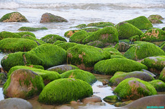 GreenBoulders (mcshots) Tags: ocean california travel camping sea usa green beach nature water coast moss scenery rocks stones stock shoreline boulders socal mcshots venturacounty springtime wowiekazowie