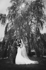 Wedding (siebe ) Tags: wedding holland tree love dutch groom bride couple nederland thenetherlands liefde huwelijk trouwen 2014 bruiloft bruidspaar trouwfoto bruidsreportage trouwreportage bruidsfotografie bruidsfoto siebebaardafotografie