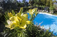 Fiore (antonio2047) Tags: foglie piscina fisheye fiore acqua piante azzurro colori vegetazione canoniani