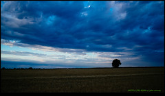 140701-1785-EOSM.jpg (hopeless128) Tags: sky france clouds eurotrip lonetree 2014 poitoucharentes soletree nanteuilenvalle
