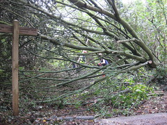 Clearing a fallen tree