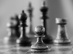 (koliru) Tags: macro closeup canon eos blackwhite soft chess piece tamron 90mm f28 boken 60d