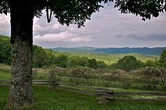 North Carolina Mountain View (John H Bowman) Tags: summer june parks northcarolina nationalparks blueridgeparkway 2012 flowersandplants ncmountains wataugacounty nrhp canon24105l fencesgates moseshconememorialpark june2012