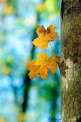 Autumn colors.. (Atarug) Tags: beauty lens photography interesting bokeh awesome desenfoque bella fotografia impresionante tecnica nikonlens catalunyacatalonia focoselectivo interesantsimo nikond700 palabrasweb atarug