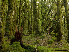 Middle Earth  *EXPLORE* (Lyndon (NZ)) Tags: newzealand nature outdoors bush fuji gimp forestpark wairarapa 2014 tararua xs1 fujifilmxs1