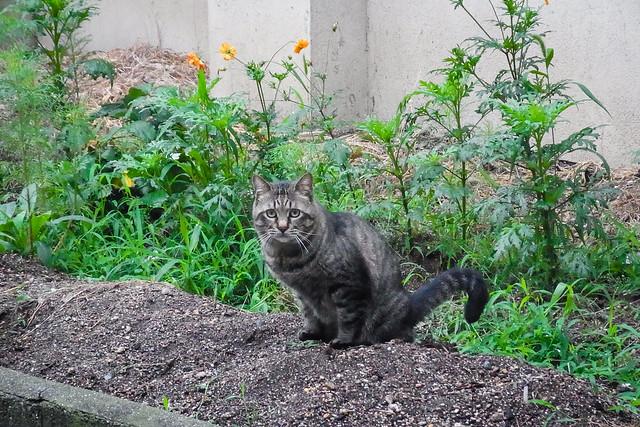 Today's Cat@2014-07-07