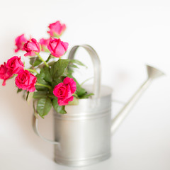 (Ash2ash) Tags: flowers red stilllife rose 紅色 靜物 wateringpot 花卉 玫瑰 澆花壺