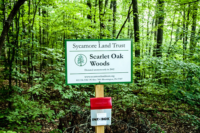 Scarlet Oak Woods - July 10, 2014