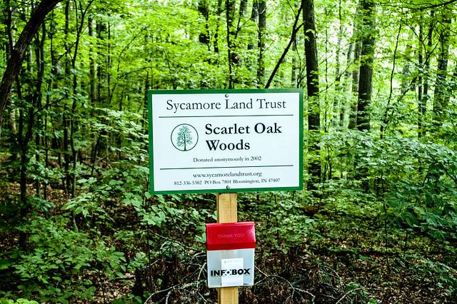 Scarlet Oak Woods - July 10, 2014