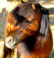 Kentucky Horse Park - Lexington KY (Meridith112) Tags: statepark park light shadow summer horses horse nikon shadows lexington kentucky ky fayettecounty horsepark kentuckyhorsepark nikon2485 kentuckystateparks northcentralkentucky nikond7000