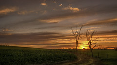 end of the day (dundox1) Tags: road trees sunset sun landscape cloudy ngc temora conola