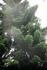 (my.secret.lover) Tags: love film nature beauty 35mm lofi mother zenit zenitb zcg