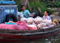 N18 Mekong Delta, Delta du Mekong, Vietnam, My Tho, Can Tho, Vinh Long, Long Xuyen, Sa Dec, Soc Trang, Cao Lanh, Chau Doc, Ca Mau, Cai Rang, Phmg Hiep, Phong Dien, Cai Be, March Flottant, Floating Market, Vietnamiens Vietnamiennes, Vietnamese People (tamycoladelyves) Tags: trip ladies woman man cute men lady wonderful amazing nice fantastic women vietnamese tour awesome great delta super vietnam stunning excellent extraordinaire guide traveling mekongdelta paysage mekong beau magnifique floatingmarket hommes insolite femmes beautifull delightful nationalgeographic cantho fleuve mytho routard curiosit carnetdevoyage trange mekongriver superbe chaudoc oustanding longxuyen cairang ravissant vietnamien sadec vietnamienne vinhlong caibe soctrang vietnamesepeople caolanh surprenant officedutourisme marchflottant camau touroperator deltadumekong phongdien journeydiary croisiremekong mekongcruse phmghiep lonelyplanete