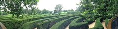 Maze panorama (kcox5342) Tags: illinois arboretum hedge maze morton lisle