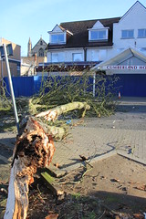 IMG_2569 (Jeff And) Tags: harrow harrowtowncentre tree storm damage wind down