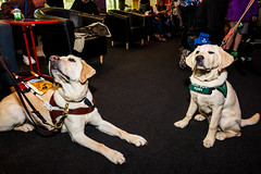Guide Dogs for the Blind 8 (NickRoseSN) Tags: guidedogsfortheblind guidedogs dogs virginamerica alaskaairlines airline burlingame sanmateocounty sanmateo sanfrancisco sf sfo sfoairport sanfranciscoairport sanfranciscointernationalairport sfbayarea bayarea california ca