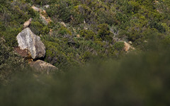 Basking (Katie Nethercoat Photography) Tags: vulture bird nature wildlife spain migration nikon mountains griffon