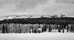 Yellowstone Winter (David Recht) Tags: grandteton moran wyoming unitedstates us yellowstonenationalpark winster blackwhite