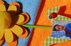 Blue&Orange (Lenaprof) Tags: orangeandblue macromondays cmwdorange