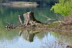 Mein Bruchsaler Hügelland (infactoweb) Tags: weingarten moor grötzingen wandern infactoweb