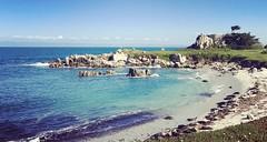 (EleveNateXI) Tags: harborseals beach ocean sea ca california pacificgrove hopkins marine station stanfordmarinelaboratory nature wildlife biology
